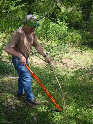 The Extractigator works great at removing Alder Trees