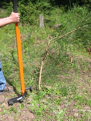 Broom Buctkthorn And Tree Puller The Extractigator In Action